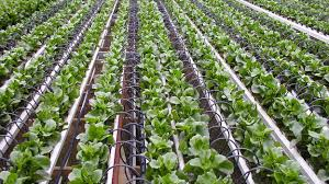 Horticulture policy